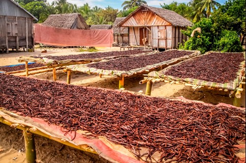 Production of vanilla in Madagascar